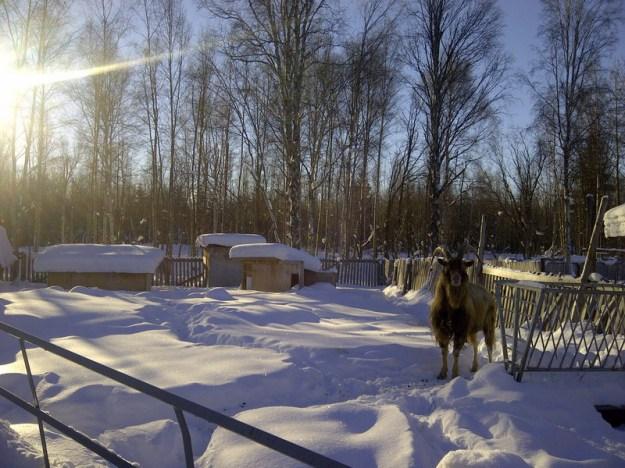 schnee mit alfred